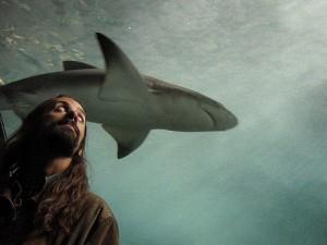 tiburon-estanque